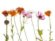 tło białe kwiaty Obrazy Stock