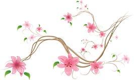 tło białe lilie Obrazy Stock