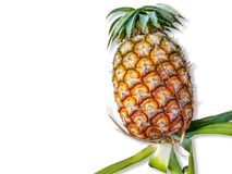 tło biel świeży odosobniony ananasowy obraz royalty free