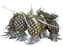 tło biel świeży odosobniony ananasowy obrazy royalty free