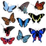 tło biel piękny motyli ustalony kolekcja kij Fotografia Royalty Free