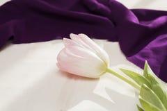 tło biel różowy tulipanowy Zdjęcia Royalty Free