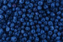 tło blueberry konsystencja świeżych owoców zdjęcie stock