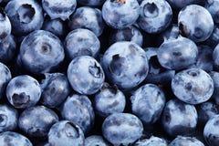 tło blueberry konsystencja świeżych owoców Zdjęcie Royalty Free