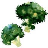 tło brokuły odizolowywali biel ilustracji