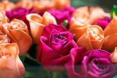 Tło brzoskwini i karmazynów róże Piękne koralowe róże, kwiatu bukiet zamknięty w górę Bukiet karmazyny i brzoskwini róże zdjęcie stock