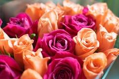 Tło brzoskwini i karmazynów róże Piękne koralowe róże, kwiatu bukiet zamknięty w górę Bukiet karmazyny i brzoskwini róże zdjęcie royalty free