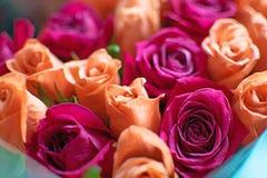 Tło brzoskwini i karmazynów róże Piękne koralowe róże, kwiatu bukiet zamknięty w górę Bukiet karmazyny i brzoskwini róże obrazy royalty free