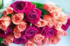 Tło brzoskwini i karmazynów róże Piękne koralowe róże, kwiatu bukiet zamknięty w górę Bukiet karmazyny i brzoskwini róże obraz stock