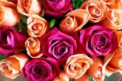 Tło brzoskwini i karmazynów róże Piękne koralowe róże, kwiatu bukiet zamknięty w górę Bukiet karmazyny i brzoskwini róże zdjęcia stock