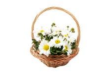 tło bukiety gręplują dekoracyjnego kwiecistego kwiatów ilustraci dwa wektor wiosna kwiat Zdjęcia Royalty Free
