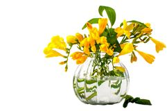 tło bukiety gręplują dekoracyjnego kwiecistego kwiatów ilustraci dwa wektor wiosna kwiat piękno Zdjęcia Royalty Free