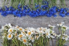 Tło bukiety piękni dzicy kwiaty stokrotki i cornflowers na tle stary drewniany tło kopia obrazy royalty free