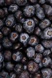 tło czarna jagoda Zdjęcie Stock