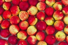 Tło czerwoni jabłka Fotografia Royalty Free