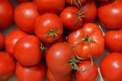 Tło czerwoni pomidory, zakończenie obraz royalty free