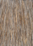 Tło dach, sucha trawa lub siano pokrywający strzechą, Tekstura wysuszona trawa Zdjęcie Stock