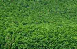 tło deszcz lasowy przesłodzony Zdjęcia Stock