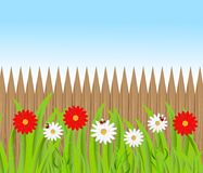 Tło dla projekta z drewnianym ogrodzeniem pięknym kwiatem i Zdjęcie Stock