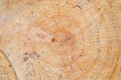 Tło. drewno. Bagażnika przekrój poprzeczny (odgórny widok). Zdjęcia Royalty Free