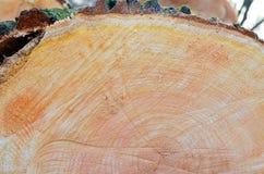 Tło. drewno. połówka bagażnika przekrój poprzeczny (odgórny widok). Obrazy Stock