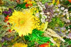 Tło duży żółty kwiat i mali kwiaty Zdjęcie Royalty Free