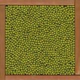 tło fasole Mung zdjęcie stock