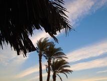 Tło gałąź daktylowe palmy i niebieskie niebo Obraz Stock