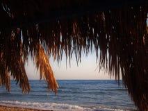 Tło gałąź daktylowe palmy i niebieskie niebo Fotografia Stock