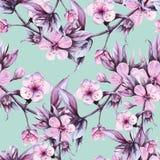 Tło gałąź z różowymi czereśniowymi kwiatami bezszwowy wzoru beak dekoracyjnego latającego ilustracyjnego wizerunek swój papierowa Obraz Royalty Free