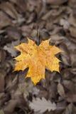 Tło grupowej jesieni pomarańczowy urlop Obrazy Royalty Free