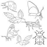 tło insekty ustawiają biel Fotografia Royalty Free