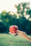 tło jabłkowy ręce kobiety white odosobnione gospodarstwa Zdjęcie Royalty Free