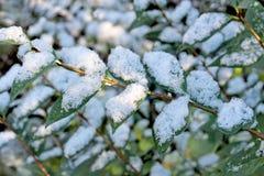 Tło jesień liść. Pierwszy śnieg. Zdjęcie Stock