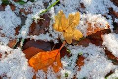 Tło jesień liść. Pierwszy śnieg. Obrazy Stock