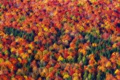 Tło jesieni tekstury wzór zdjęcia royalty free