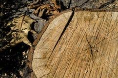 Tło kadłubowy okręgu drzewo Zdjęcia Royalty Free