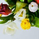Tło, kartka z pozdrowieniami: bukiet stubarwni tulipany na lekkim tle Układ, mocap, dla twój teksta macierzystego, s dnia ', copy Obrazy Royalty Free