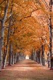 Tło kolor żółty, pomarańcze, czerwoni spadek jesieni drzewa w lasowych drewnach Fotografia Royalty Free
