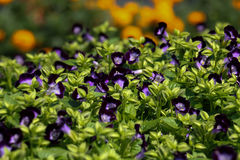 Tło kwiat 41 i światło Obraz Royalty Free