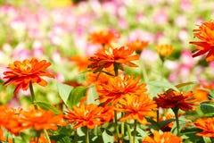 Tło kwiat 38 i światło Zdjęcia Stock