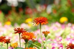 Tło kwiat 39 i światło Obrazy Stock