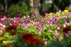 Tło kwiat 40 i światło Fotografia Royalty Free