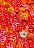 tło kwiaty obrazy stock