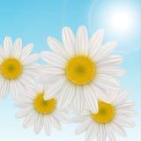tło kwiaty ilustracji