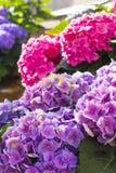 Tło kwiaty w garnku w piwie uprawiają ogródek przed kopuły katedrą Zdjęcia Royalty Free