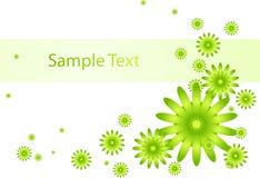 tło kwiaty zielenieją biel Zdjęcie Stock
