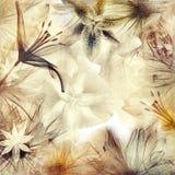 tło kwiecisty Fotografia Stock