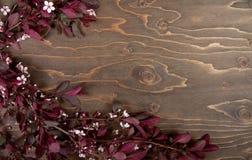 tło kwitnie gałąź drewniane obraz stock