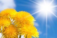 tło kwitnie wiosna obraz stock